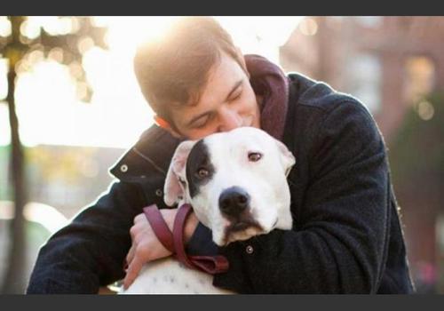 Lo que tu Perro no Soporta