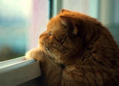 Los gatos y la depresión