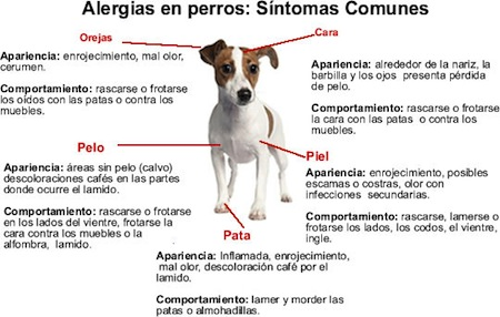 Alergias Caninas