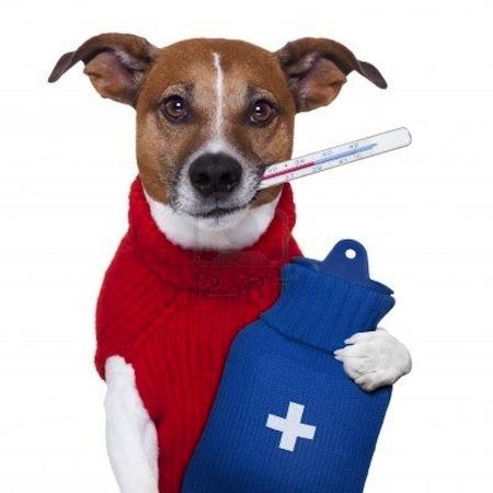 Anemia en perros