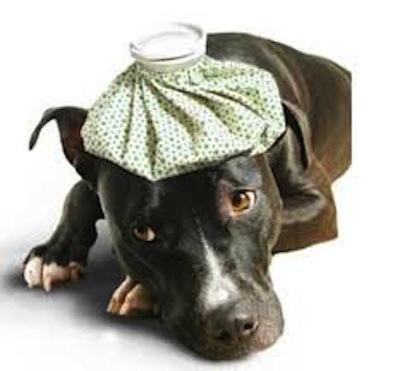 Causas y Tratamiento de la diarrea en Perros
