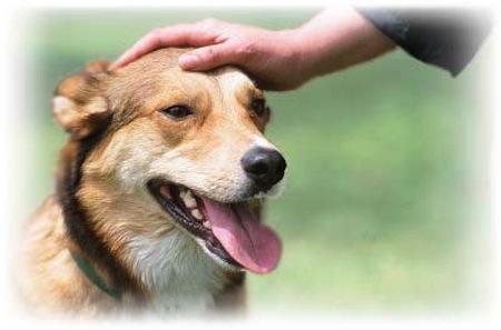 Cómo acariciar a nuestro Perro