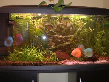 Como cambiar tu acuario