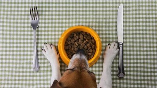 Diferentes dietas para Mascotas