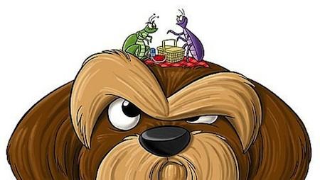 Eliminar pulgas en Perros
