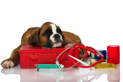 Lo que debe contener un botiquín para Perros