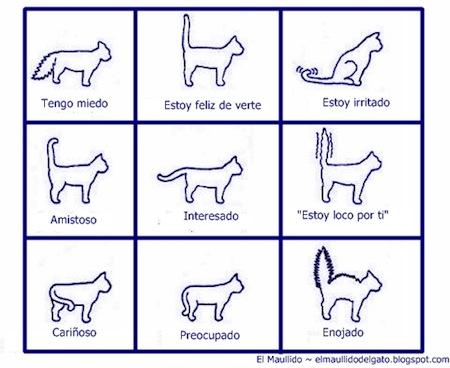 Los Gatos y su lenguaje