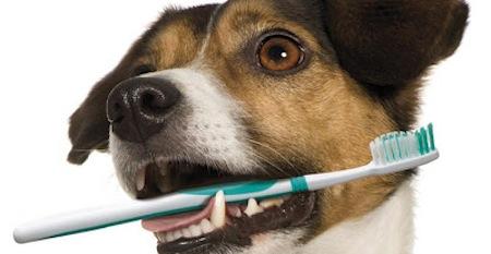 Los dientes de los perros