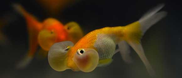 Los mejores peces para tu Acuario