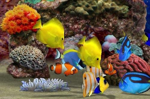 Los peces como mascotas