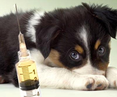 Medicina Preventiva en Mascotas