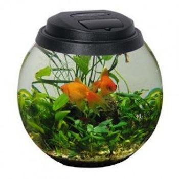 acuario para peces peque os