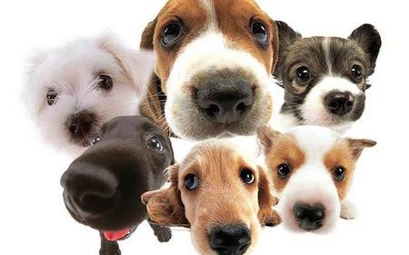 Adiestramiento Canino para primiparos
