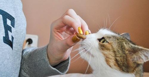 Como debemos adiestrar un Gato