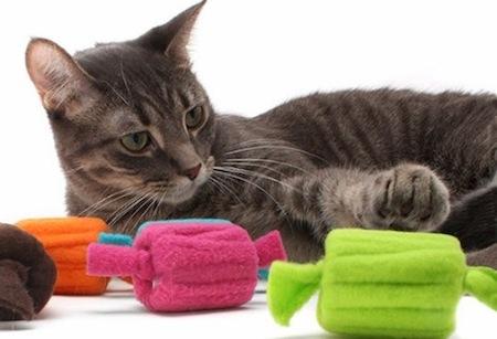 Cómo debemos adiestrar un Gato