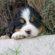 Cuidados de un cachorro en sus primeros días