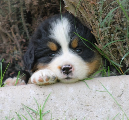 Cuidados de un cachorro en sus primeros dias