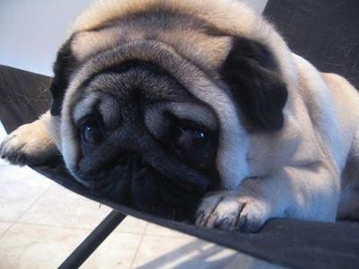 Los cuidados de la piel de las mascotas