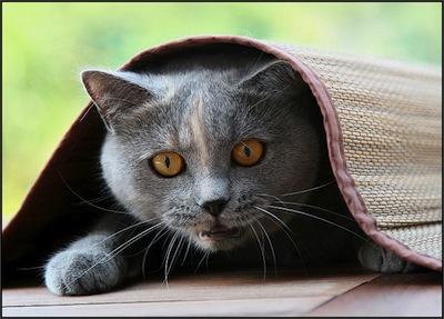 La ansiedad en los Gatos  La ansiedad en los Gatos