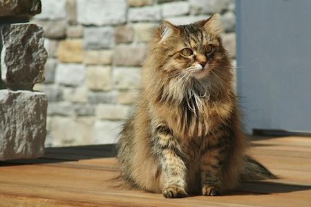La vejez del Gato Síntomas