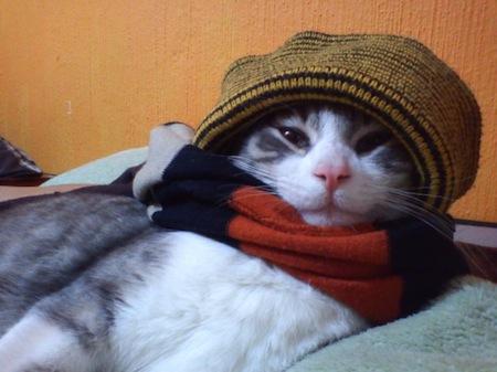 Los Gatos y el Invierno