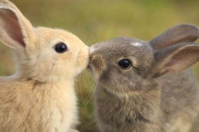 Sobre Conejos