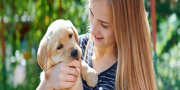 5 Cuidados básicos que necesita tu perro