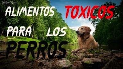 Alimentos toxicos para los Perros