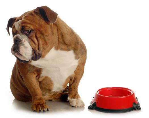 Cómo tratar el estreñimiento en las Mascotas