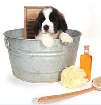 Champús antiparásitos para mascotas