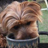 Cómo evitar que tu Perro coma mucho