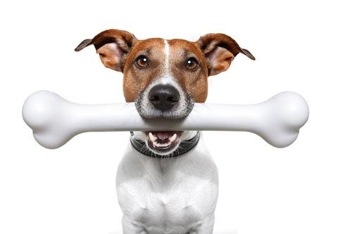Cuando dar huesos a tu Perro