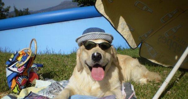 Cuidados de nuestro Perro en Verano