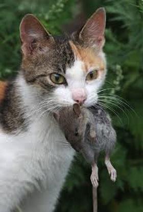 Intoxicación en Mascotas