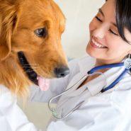 Las Mascotas necesitan Vitaminas