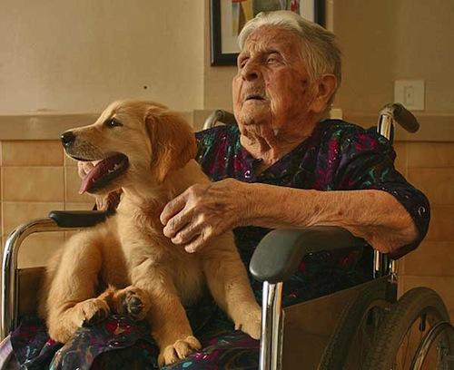 Los Perros de Terapia