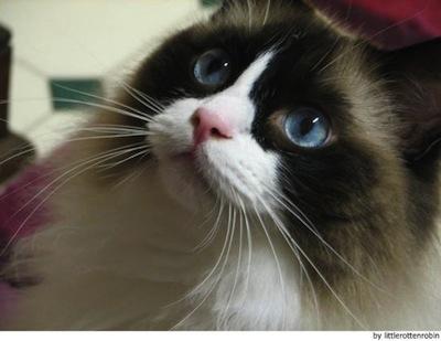 Los cuidados del Gato Rangoll