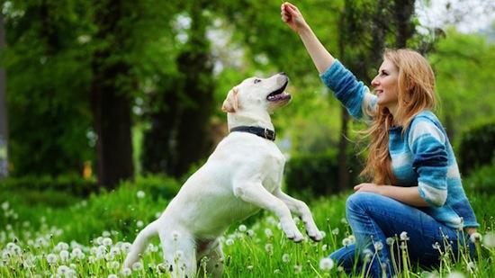 Primeros pasos en la educación del Perro
