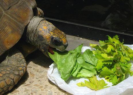 Que comen nuestras Tortugas