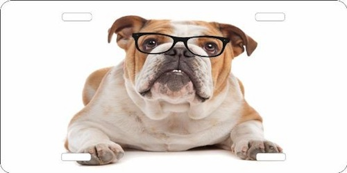 Salud visual de tu Mascota
