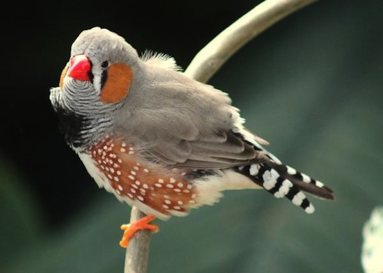 Cómo detectar un Pájaro Enfermo