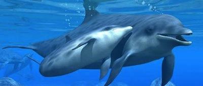 Curiosidades de los Delfines 2