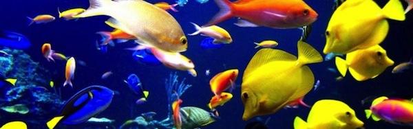 Cuidados de peces for Cuidado de peces