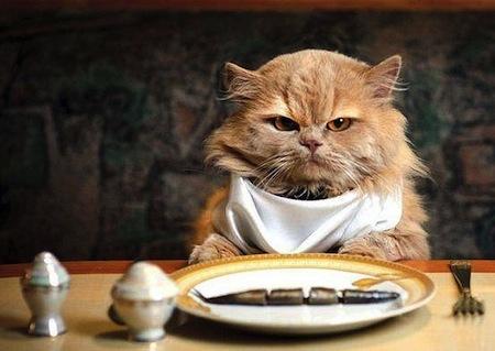 La Obesidad en los Gatos  La Obesidad en los Gatos