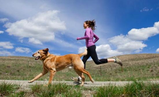 El ejercicio para Mascotas