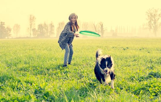 La importancia del ejercicio en los perros