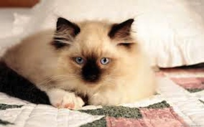 http://mascotass.com/wp-content/uploads/2012/08/Las-ventajas-de-tener-un-Gato-.jpeg