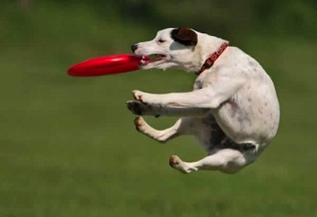 Los perros y el ejercicio
