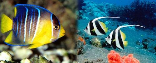 Clases de peces de acuario for Clases de peces de acuario