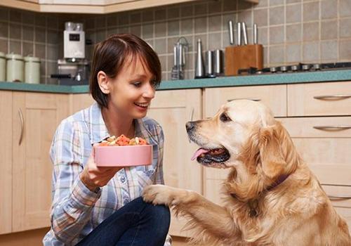 Nutrición en perros adultos